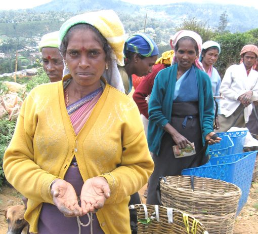 Low paid Tamil tea plantation workers in the Sri Lankan highlands