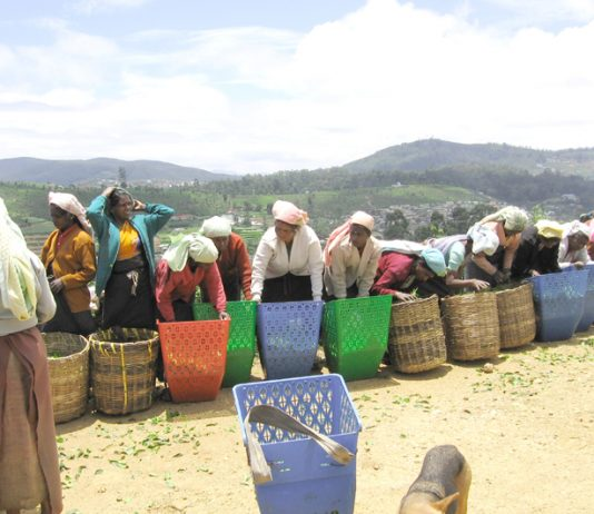 Sri Lankan tea plantation workers – being hit by huge increases in prices as well as facing the Rajapakse dictatorship