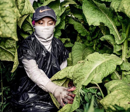 'Sofia' a 17-year-old tobacco worker, in a tobacco field in North Carolina. She started working at 13, and she said 'None of my bosses or contractors or crew leaders have ever told us anything about pesticides and how we can protect ourselves from them.'